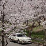 桜とレパード